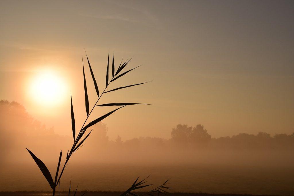 枯れた草と夕日