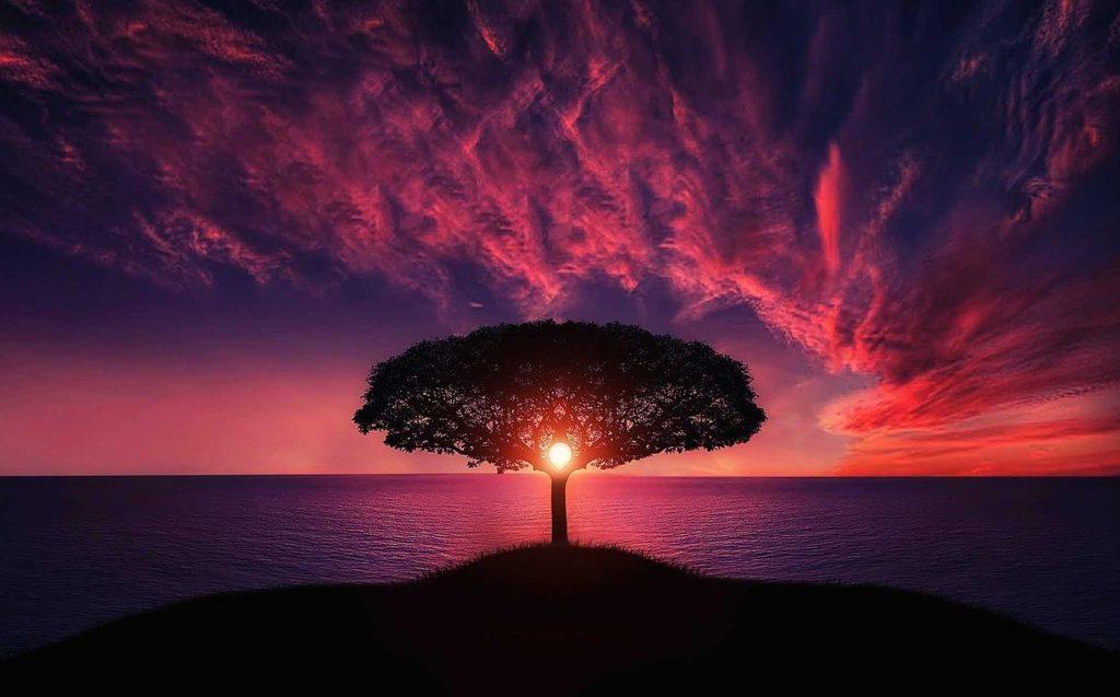 大自然の中に1本の木が立っている